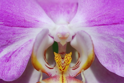 Orchiddetail
