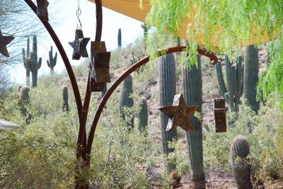 Cactustars